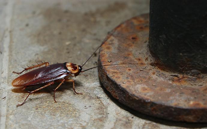 american cockroach in garage