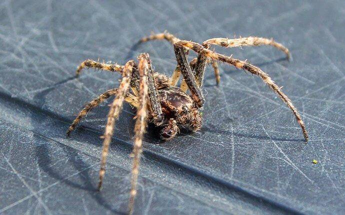 Who Else In San Antonio Wants To Keep Spiders Out Of Their Home?