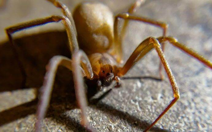 What To Do If You Spot Brown Recluse Spiders Around Your Houston Property