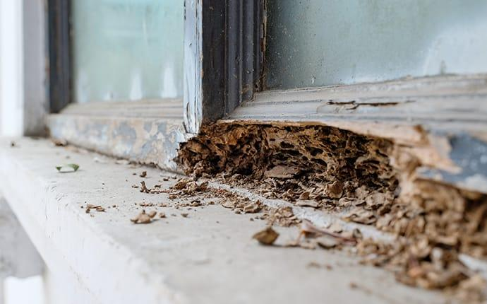termite damage on a home in burleson texas