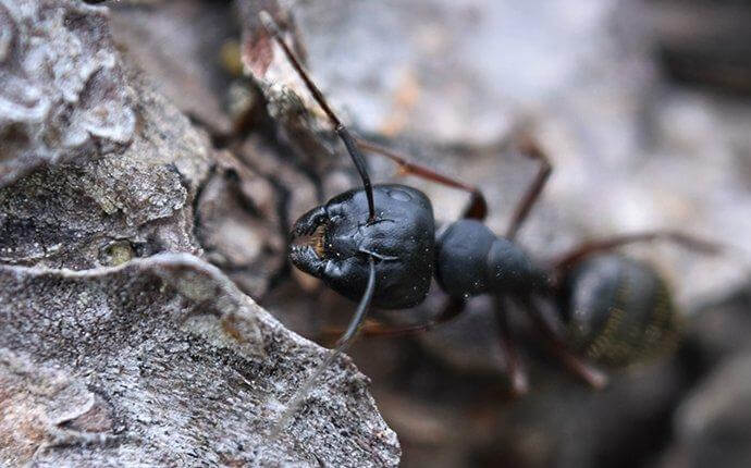 What To Do If You See Carpenter Ants About Your San Antonio Property