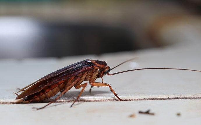 Four Easy & Effective Cockroach-Prevention Tips For Dallas Property Owners