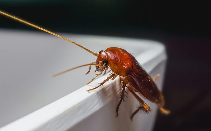 cockroach-in-commercial-kitchen-houston-tx
