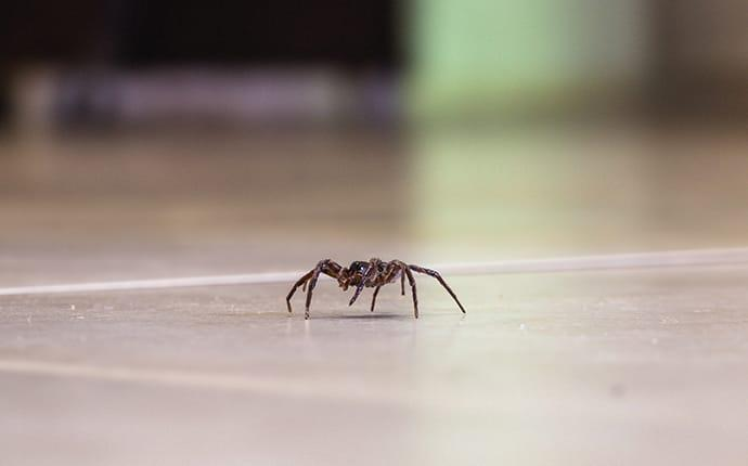 a house spider crawling in a coppell texas property