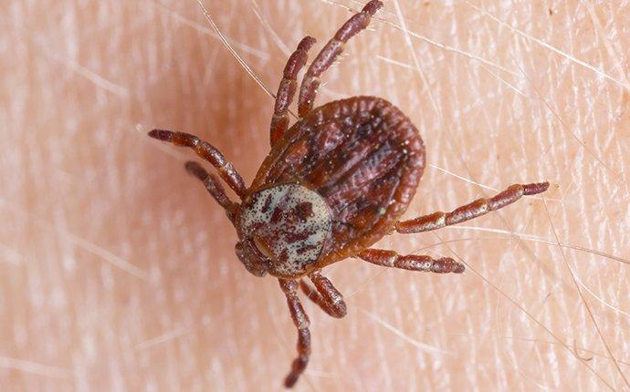 Problems Ticks Cause In Dallas/Fort Worth
