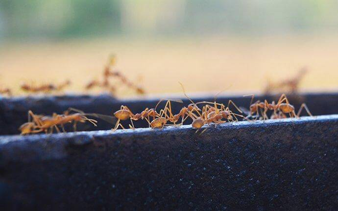 A Practical Guide To Ant Control For Your San Antonio Home
