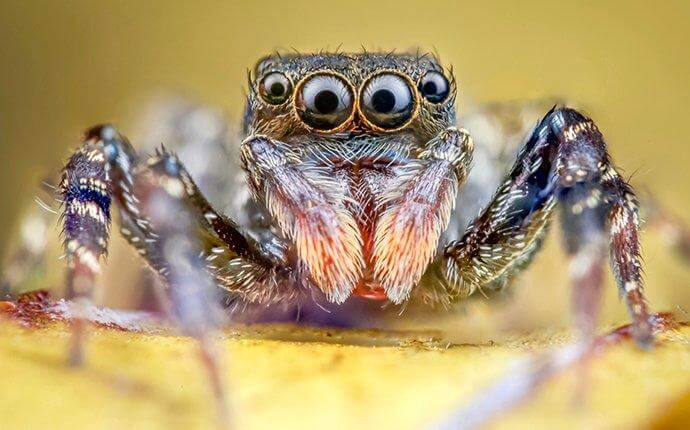 jumping-spider-standing-on-a-leaf