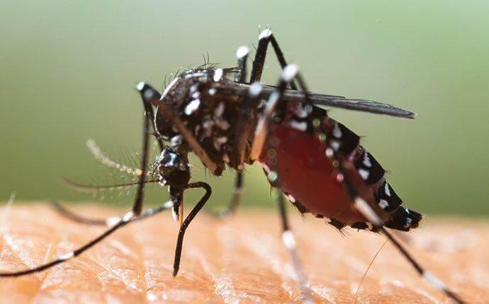 mosquito-biting-skin-minimize-exposure-3