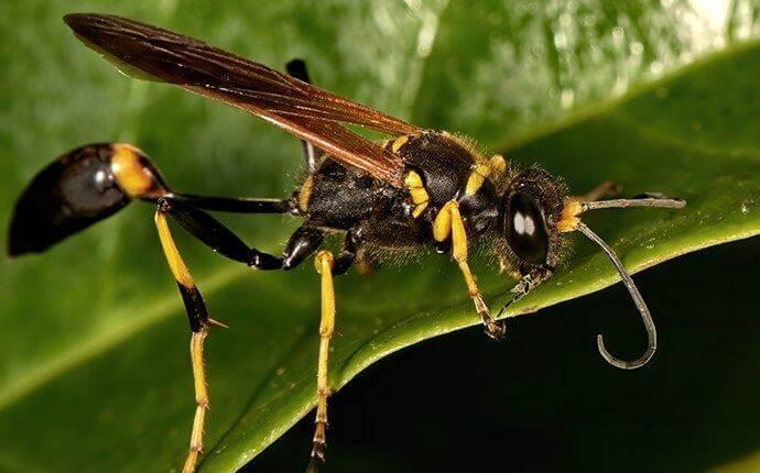 mud-dauber-wasp-on-a-flower-leaf