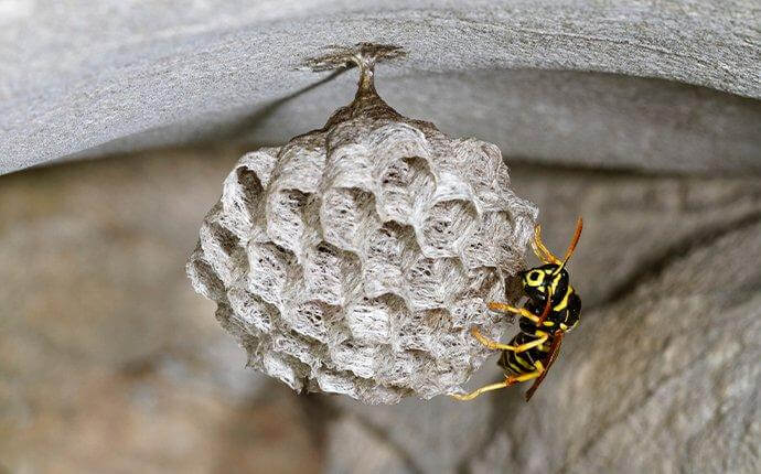paper-wasp-crawling-on-nest