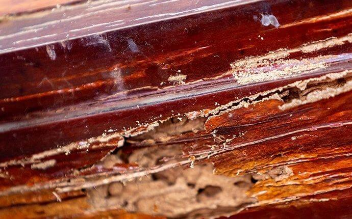 termite-damage-1