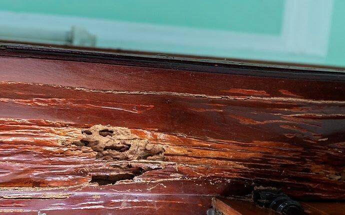 termite-damage-on-door-frame-wood