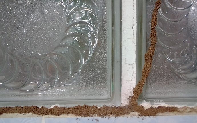 termite-tubes-on-window-signs-of-infestation