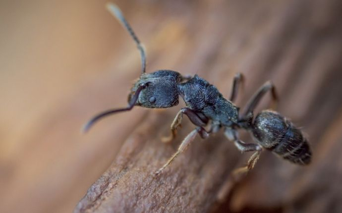A Step-By-Step Guide To Effective Ant Control For Houston Homeowners