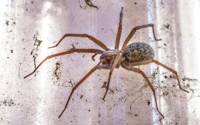 Four Quick & Simple Spider Prevention Tips For Your Houston Home