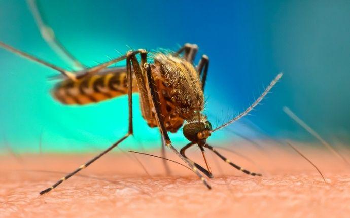 mosquito biting hand