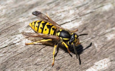 Houston Property Owners' Ultimate Wasp Prevention Guide