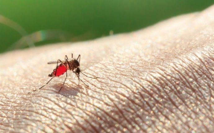 Mosquito biting a persons arm