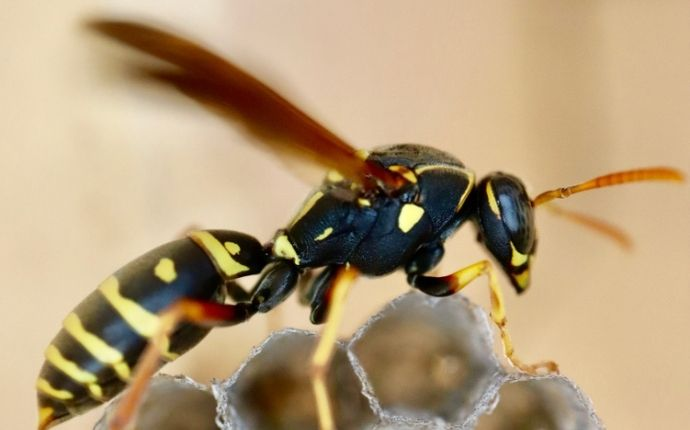 a wasp crawling on its nest in kyle texas