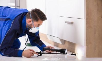 interior-pest-inspection