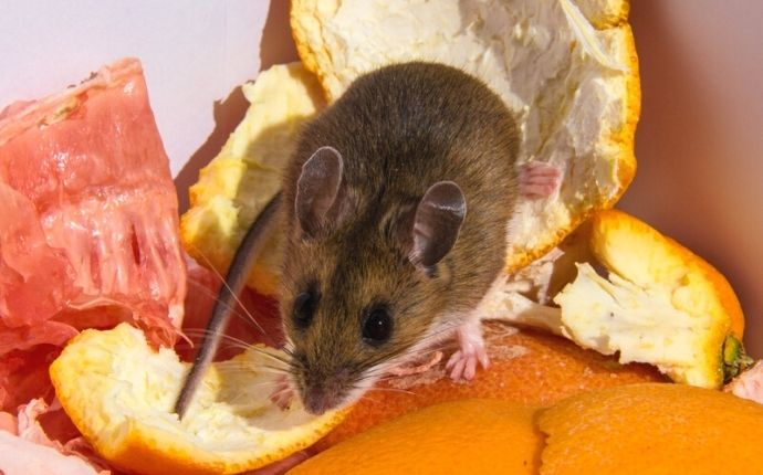 Five Simple But Effective Rodent Control Tips For San Antonio Homeowners