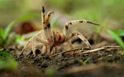 How to Kill Spiders: 4 Easy Methods You Can Do Right Now