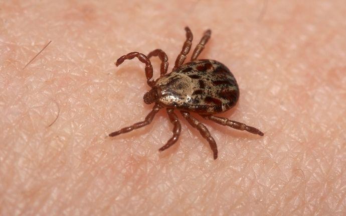 brown tick on someones skin