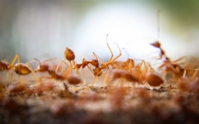Expert Tips to Keep Fire Ants Out of Your San Antonio Yard