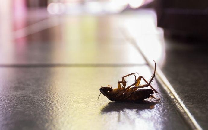 A dead cockroach lying on its back on dark tile flooring