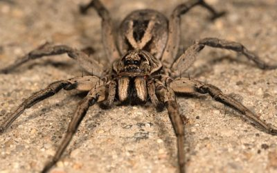 What Eats Spiders? Our Guide to Natural Spider Prevention
