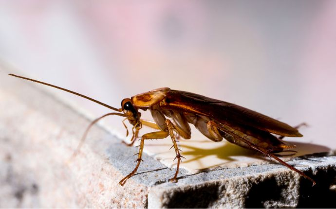 The Top 6 Signs That You Have Cockroaches in Your Dallas Home