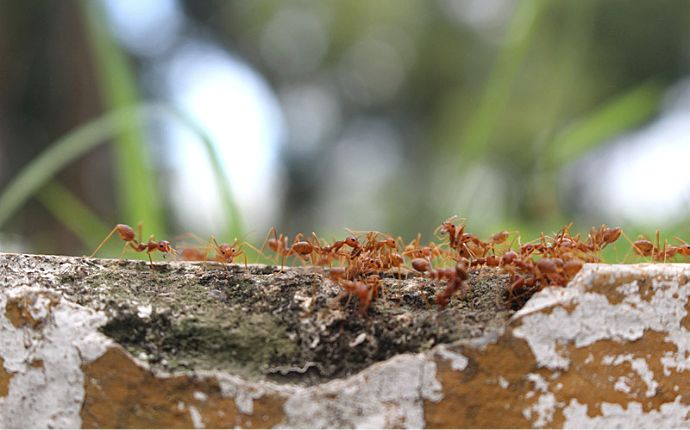 How to Control Houston Fire Ants & Keep Them Out of Your Lawn