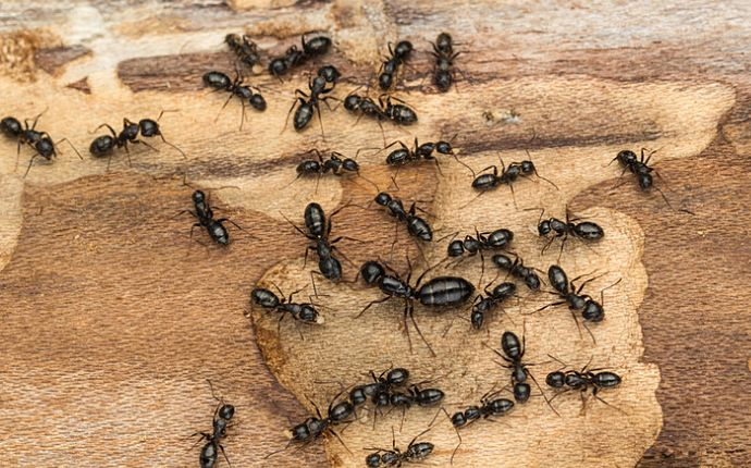 10 Tips to Keep Ants Out of Your Houston Home