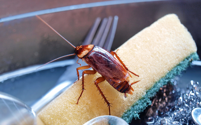 A cockroach on top of a sponge in a sink of soapy water