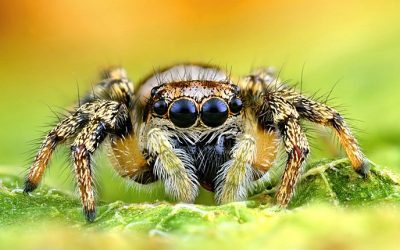 What Color Do Spiders Hate? How To Deter These Pests From Your Home