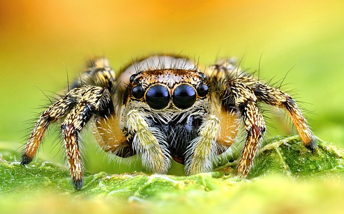 Close-up of a jumping spider on a leaf