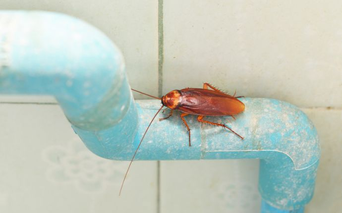 A cockroach on top of a light blue pipe