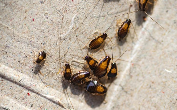 A group of cockroaches on tile