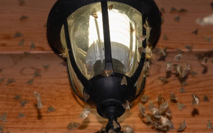 A bunch of moths surrounding a porch light
