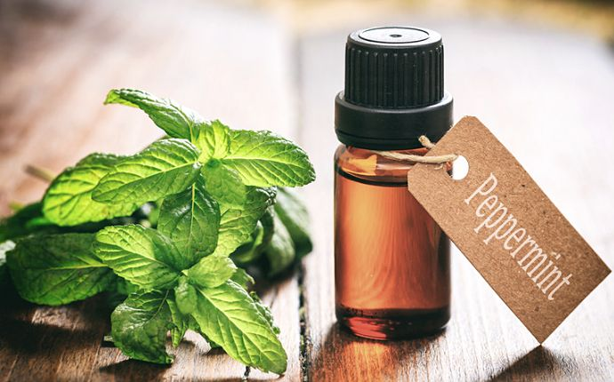 A bottle of labeled peppermint essential oil next to peppermint herbs