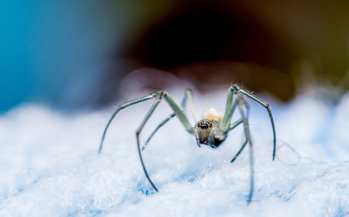 How to Repel Spiders from Your Bed at Night: The Best At-Home Tips